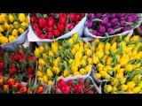 Цены на цветы к 8 марта