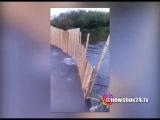 На Сахалине браконьеры перекрыли  забором устье реки, где рыба шла на нерест