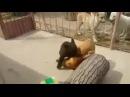 UFC BEAR VS DOG