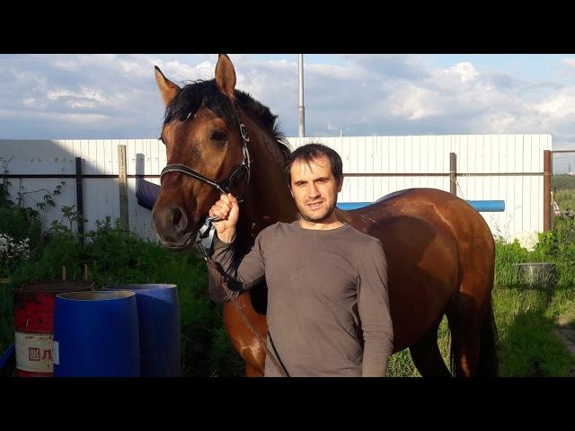 Спасти рядового коню