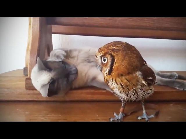 Funny Cute Owls 🦉[Funny Pets]