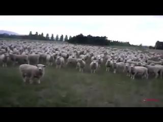 Сало украине БАРАНЫ