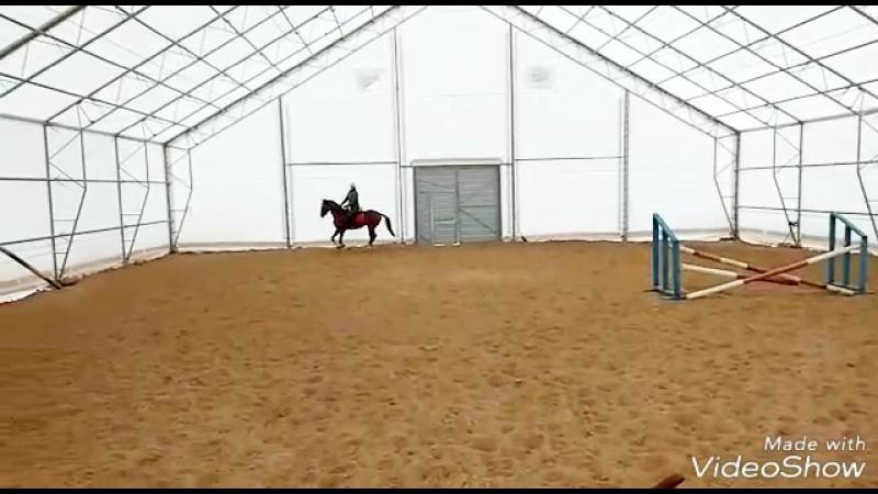 Sapar Al Labi, akhal-teke horse