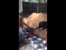 Печальная картина. Собака пытается разбудить своего друга
