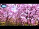 ♛♫♥ Masaru Hinaiji feat. Maromushiko - Sakura-Chiru (Dub Mix) (Pulsar Recordings) ♥♫♛