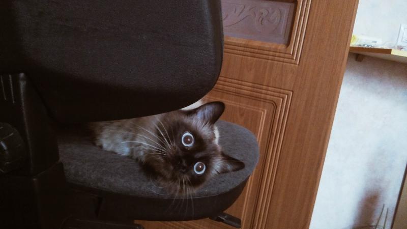 Васька голубые глазки