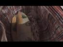 /16.01.18./ На Камчатке главарь банды ловцов кречетов предстанет перед судом ⠀ На Камчатке завершено расследование уголовного де