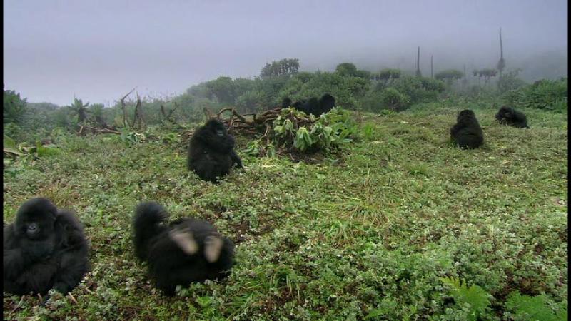 BBC. Великий рифт: Дикое сердце Африки (3 серия из 3) Трава. / Great Rift: Africa's Wild Heart / 2010