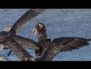 BBC Застывшая планета 4 Осень Научно познавательный природа 2011