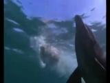 про дельфина и щенка.впечатлительным не смотреть.