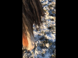 дрессировка лошади