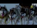 Viasat Nature | Животные, которые изменили историю : Вьючные животные [3/6]
