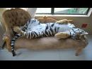 ХИЩНЫЕ животные в домашних условиях