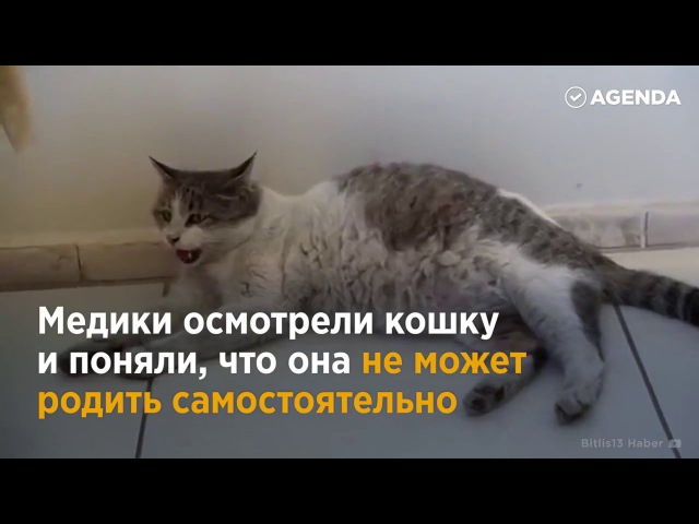 В Турции беременная кошка пришла рожать в центр семейного здоровья
