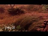 Horizon 1080p vs 2160p checkerboard PS4