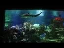 Океанариум. Часть 1