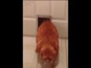 Жырный кот
