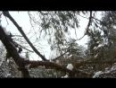 лез по дереву с экшен камерой