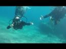 Diving Eilat 2017