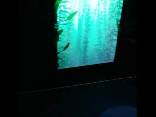 Музей океанариум в Манхэттен