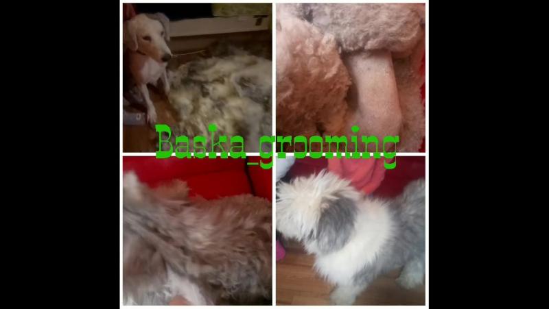 Baska_grooming