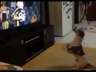 Ничего необычного, просто пес празднует гол любимой команды