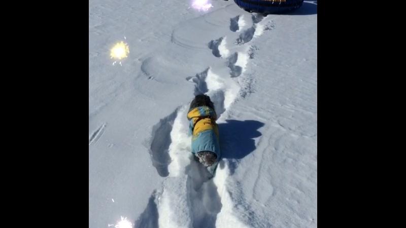 Снежно-ледовый поход Дуни🐾