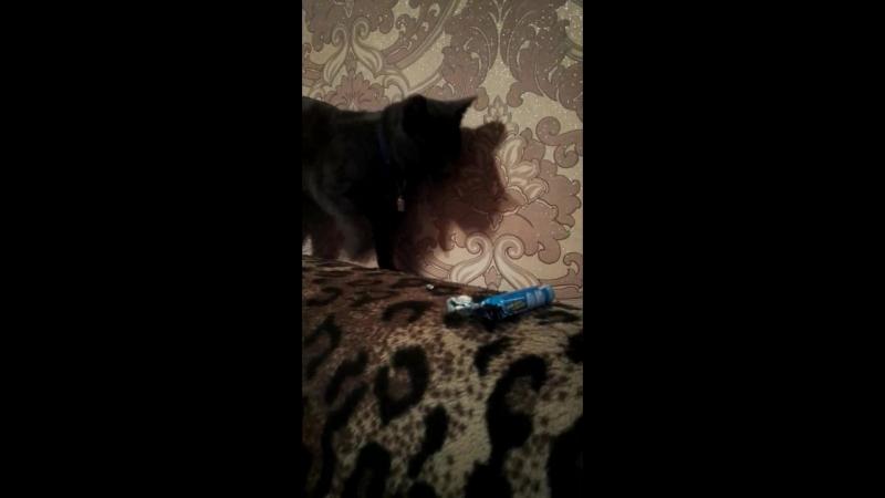 кот и ментос