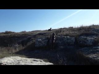Готита и Вайли на прогулке
