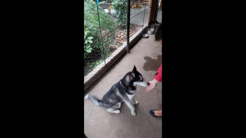 Дрессировка моей собаки 😊