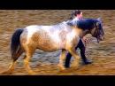 Породы Лошадей. Алтайская Лошадь. Алтайская Кучерявая Лошадь. Красивые Лошади