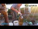Домашнее вино из зеленого крыжовника(1)