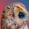 Совиная лавка   OWL STORE