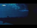 «Самые странные в мире: Акулы» (Документальный, природа, животные, 2015)