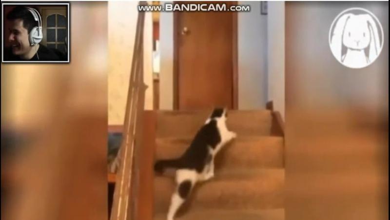 Когда котику стало плохо от котика (Винди31)