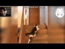 Когда котику стало плохо от котика Винди31