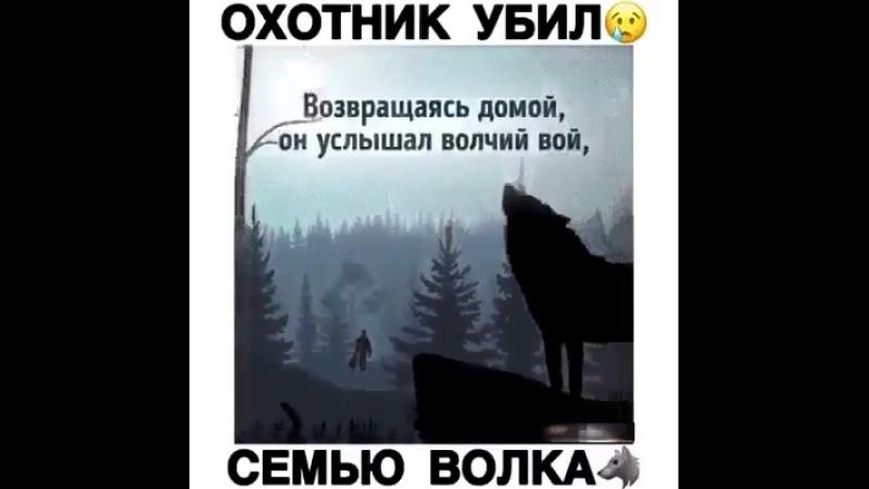 Охотник убил семью волка...
