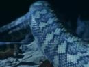 BBC - Животные - взглЯд изнутри док.Part1s.25KADR..Sharereactor
