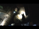 Счастливое спасение собаки в Перми