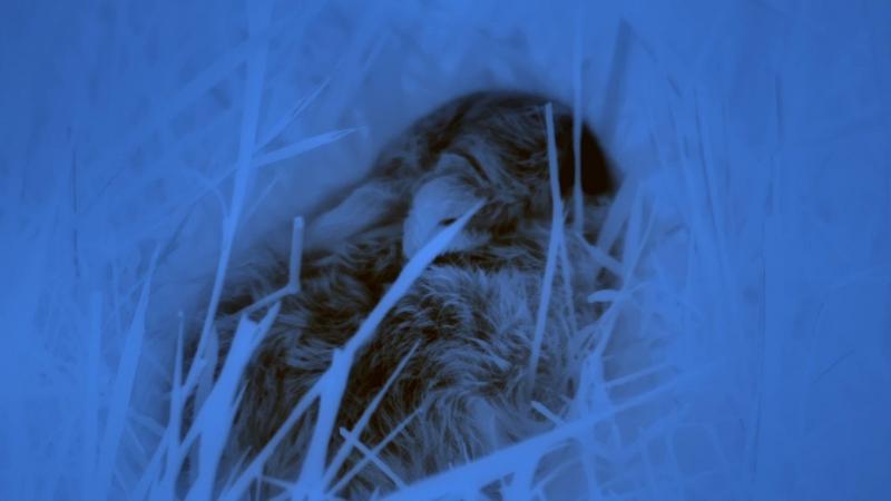 Документальный фильм BBC Британские Времена Года Зима / The Great British Year 1. Winter (2013)