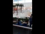 Подожгли пальму в Планете (видео зрителя)