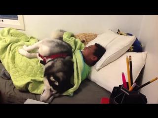 Нет! Не трогай одеяло! Пусть спит
