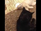 Фенека спасли и отдали в приют для животных, где он подружился с котом