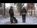 Охотничьи собаки. 30 серия. Баварская гончая