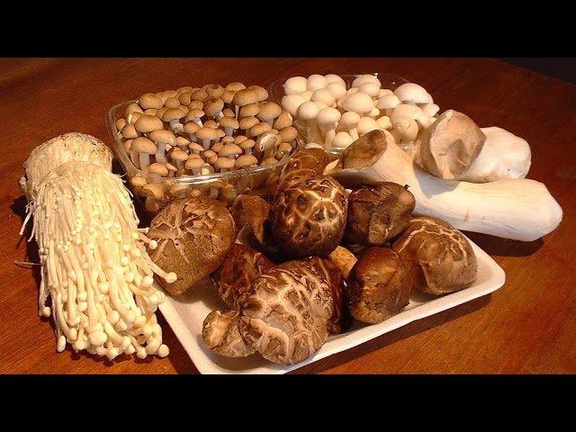 Begin Japanology - Mushrooms
