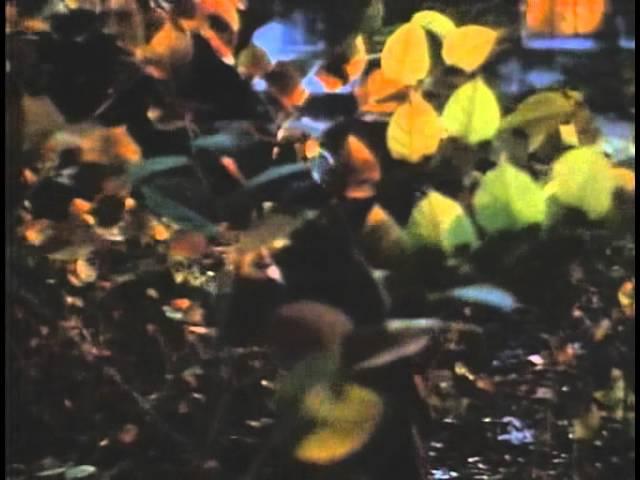 Рэй Брэдбери Банши 06 Полная версия фантастика