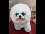 Когда у собаки ощущение стиля лучше чем у тебя