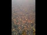 температура воды в реке Юганская Обь