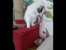 кошачьи единоборства
