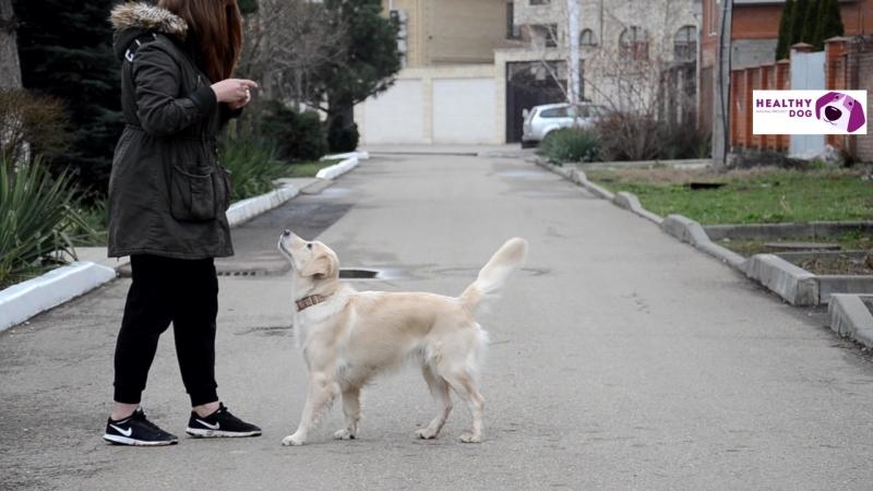 Healthy_dog_таланты Алина и Бэля